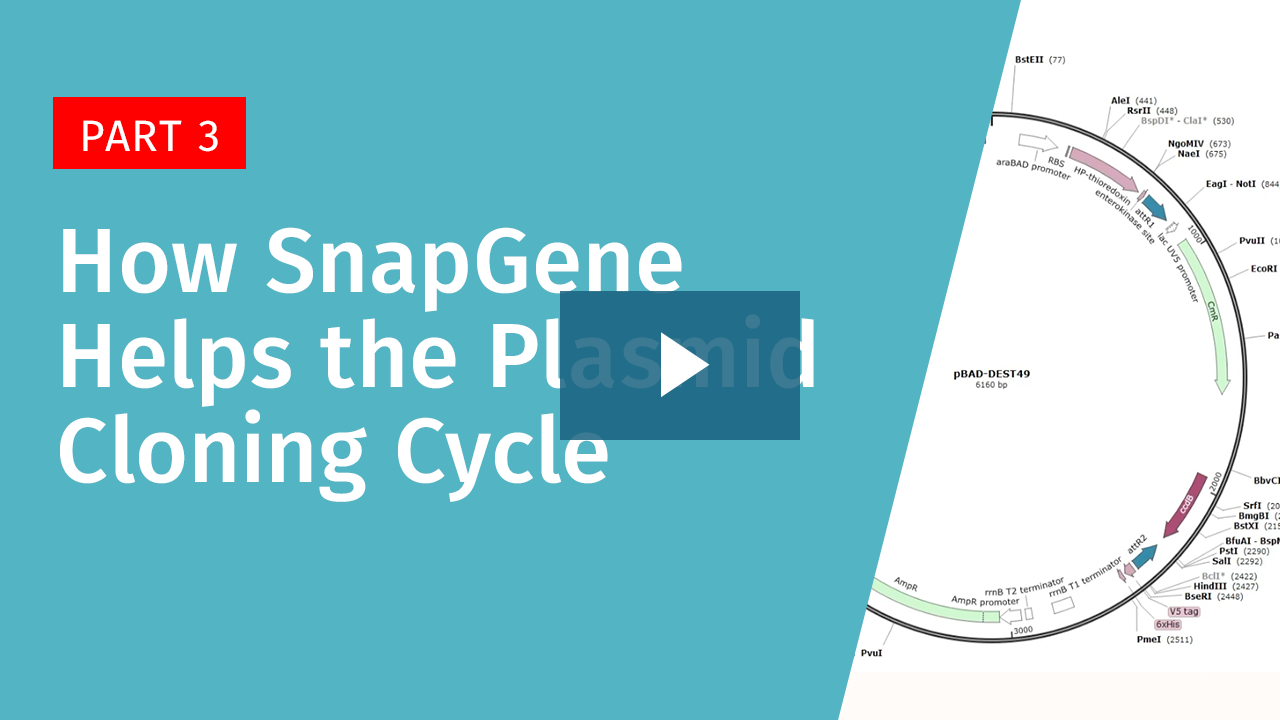 How SnapGene Helps with the Plasmid Cloning Cycle