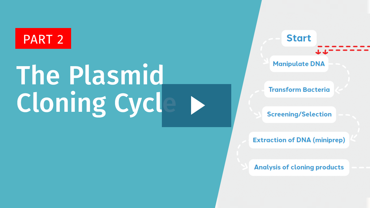 The Plasmid Cloning Cycle