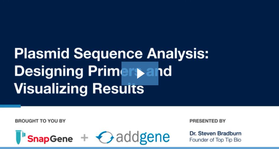 Plasmid Sequence Analysis