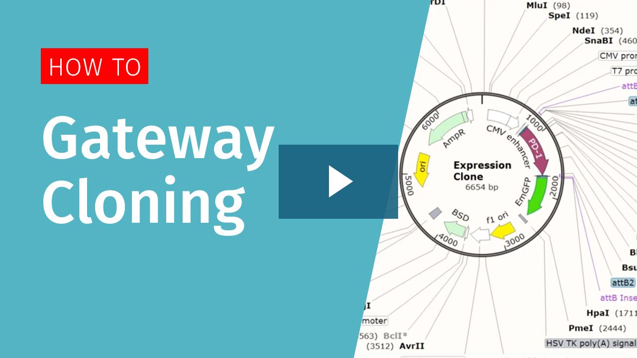 sg-gateway-cloning-playbutton3